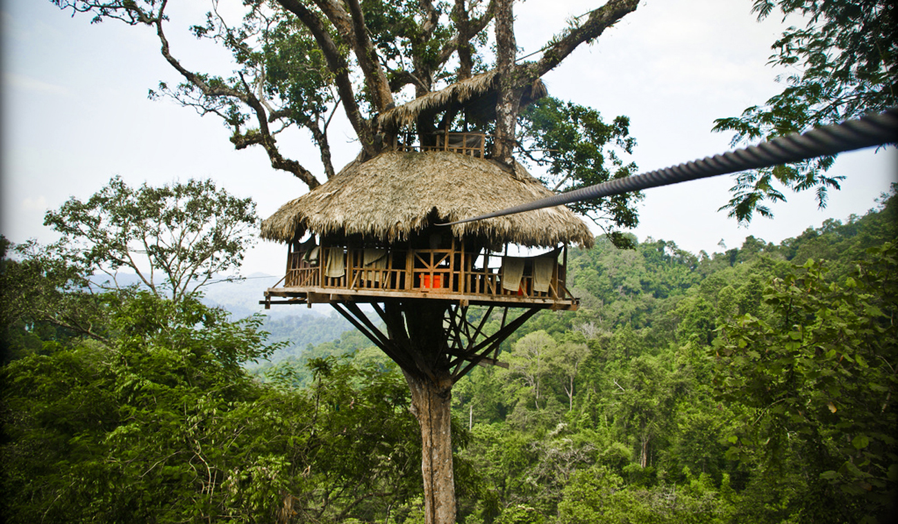The Gibbon Experience