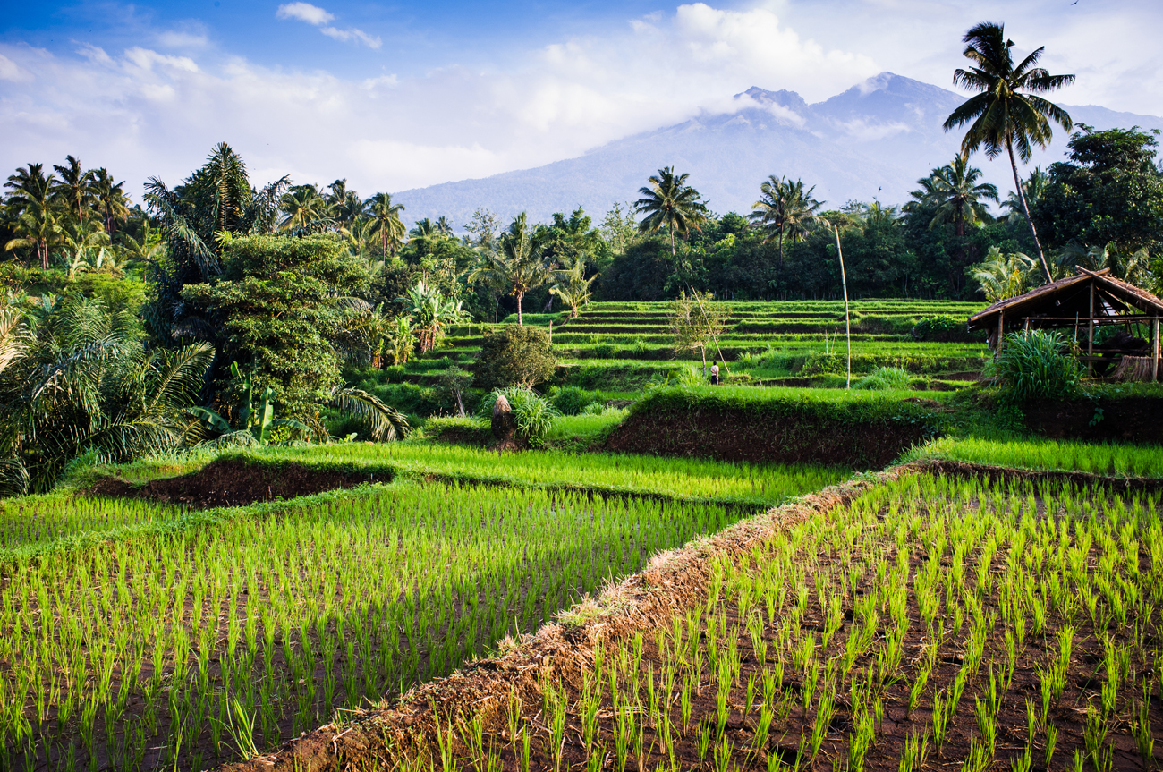 TOP ATTRACTIONS OF NORTHERN LOMBOK
