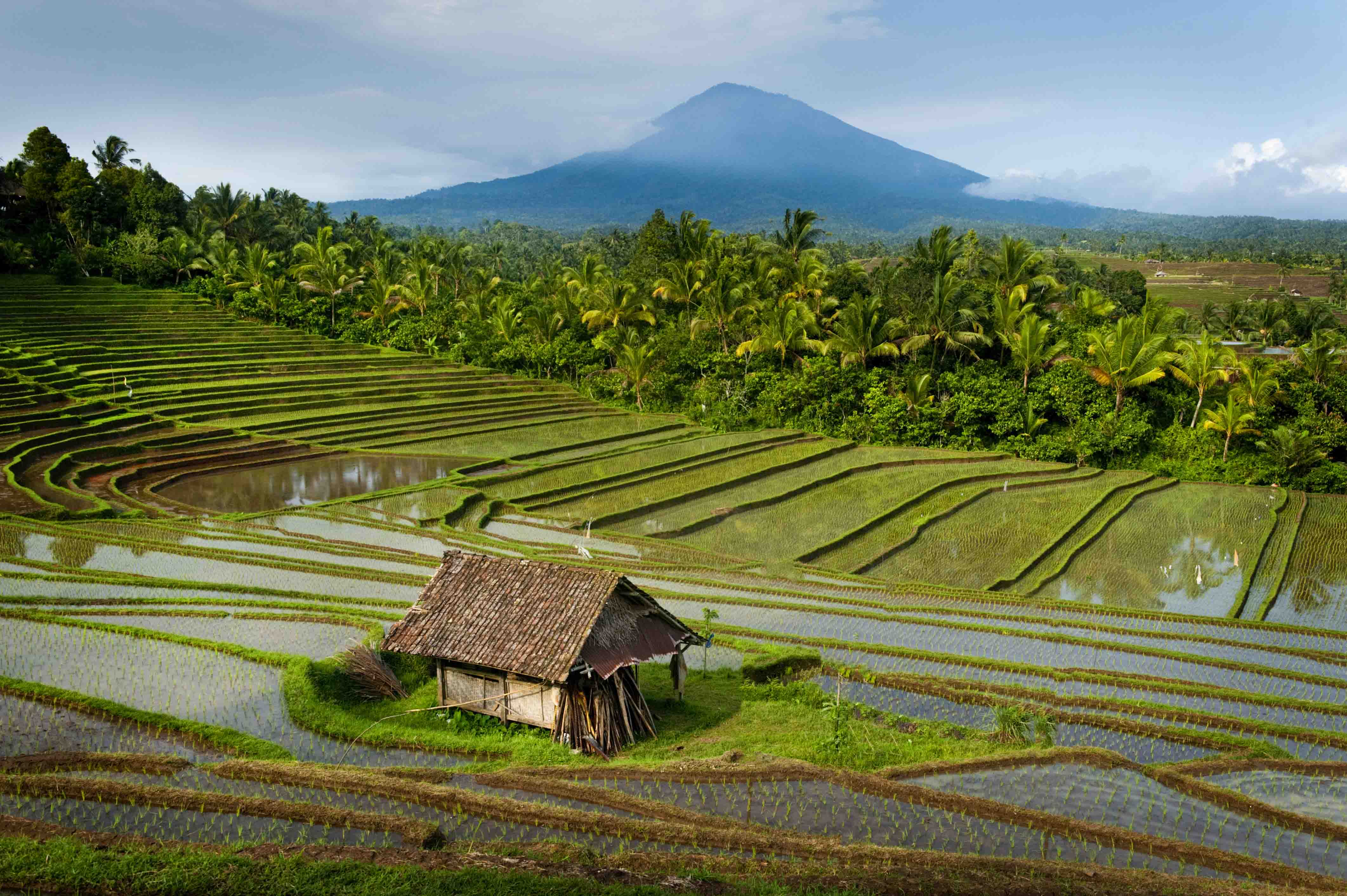 THE BEST OF BALI (ONE WEEK ITINERARY ON BUDGET)