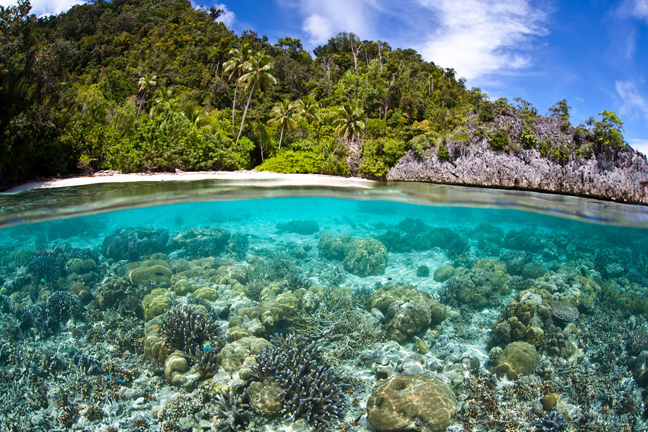 THE BEST SNORKELLING AND DIVING LOCATIONS IN PAPUA NEW GUINEA