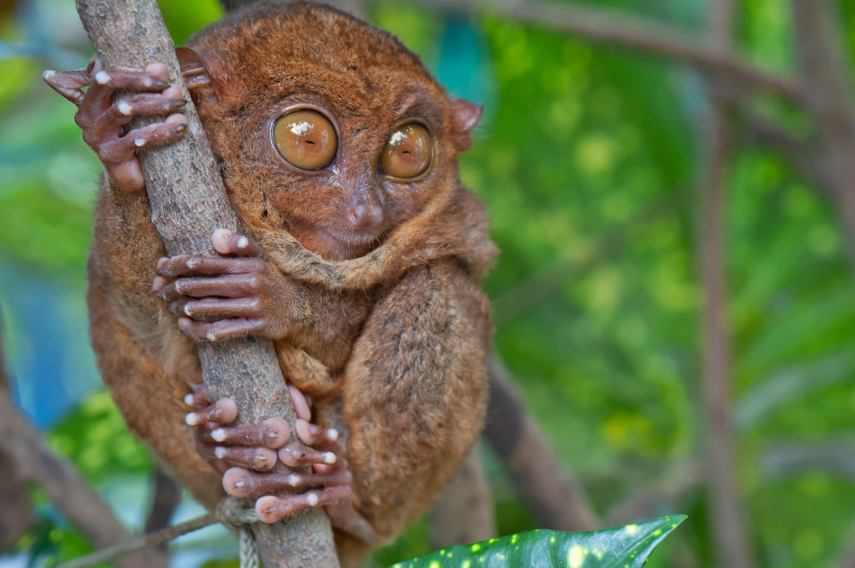 CENTRAL SULAWESI – EMBRACED BY RARITIES